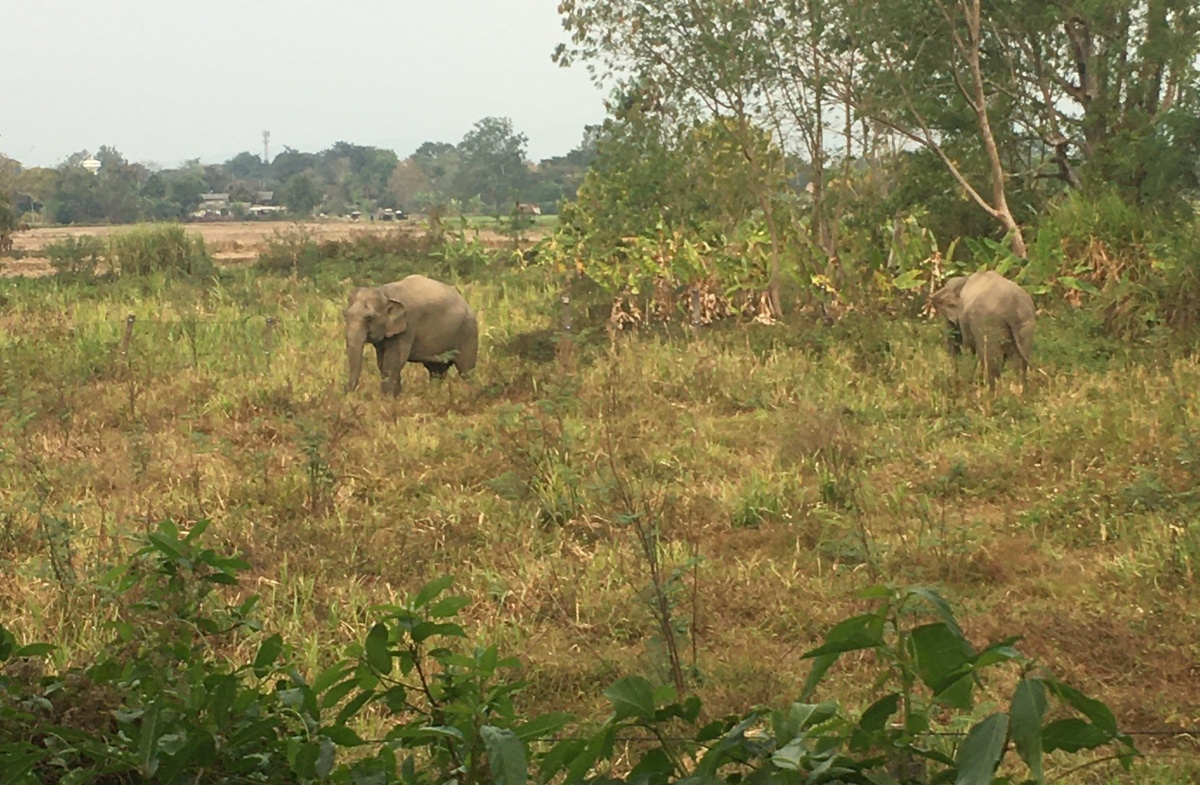 L'Elephant Valley à ChiangRai
